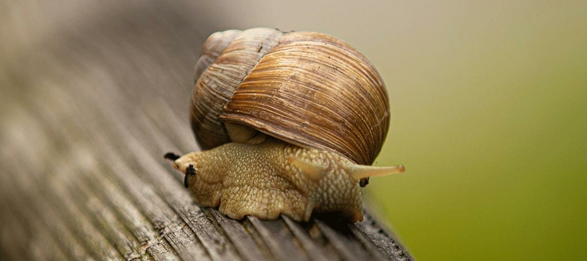 photo of a snail